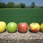 Veranstaltungsrückschau: Bio-Regio-Faire Ernährung in kommunalen Einrichtungen | RENN.west